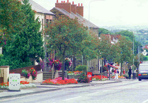 The village street in bloom